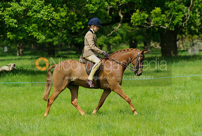 Class 42 - BSPS RIHS Pony of Show Hunter Type >122cms <=133cms photos