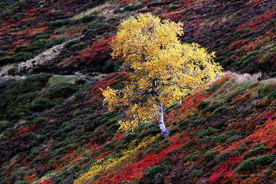 Photo autumn mountain scenery