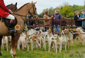 Cottesmore hounds at the meet - The Cottesmore Hunt at Toft 27/10