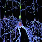 Pyramidal Cells Group from Brain
