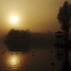 Misty golden morning at the lake