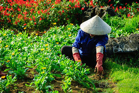 Vietnamese Gardener with Hat