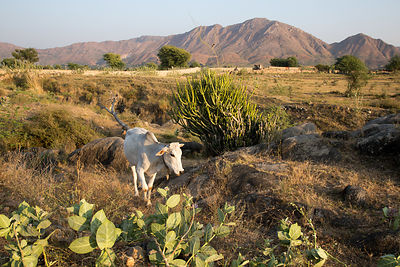 Bucolic desert and farmland with the distance, Kharekhari village, Rajasthan, India