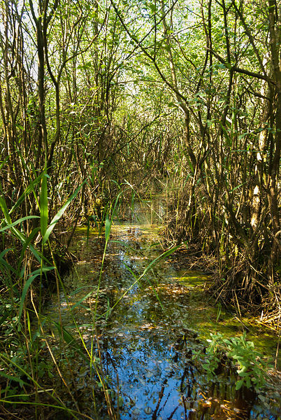 Wading path into the marsh