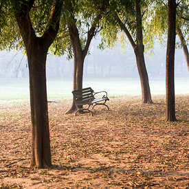 A bench in the early morning light in Nehru Park