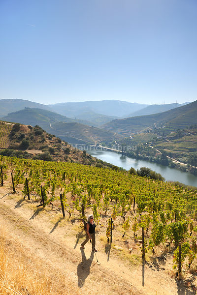 Walking trail along the Douro river, near Covelinhas. A Unesco World Heritage site, Portugal (MR)