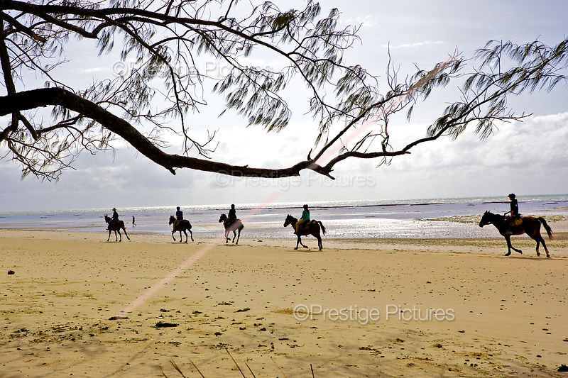 Horse Riders with overhanging branch on Myall Beach, Queensland
