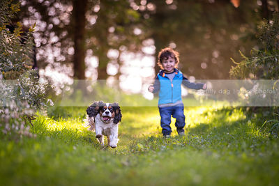 tri-color spaniel dog with young boy running in park grass in summer