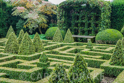 Ivy covered port-cullis shaped gazebo at the end of the Knot Garden of clipped box. Bourton House, Bourton-on-the-Hill, Moreton-in-Marsh, Glos, UK