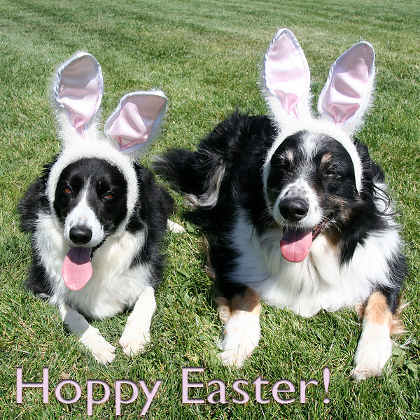 Easter Pups