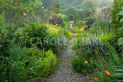 Hot borders line a path with yellow including Helenium 'Butterpat', Madia elegans, red and orange dahlias and daylilies, interspersed with blue eryngiums and veronicas. The Cider House, Buckland Abbey, Yelverton, Devon, UK