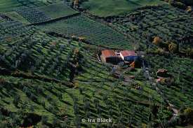 aerial view of olive orchard