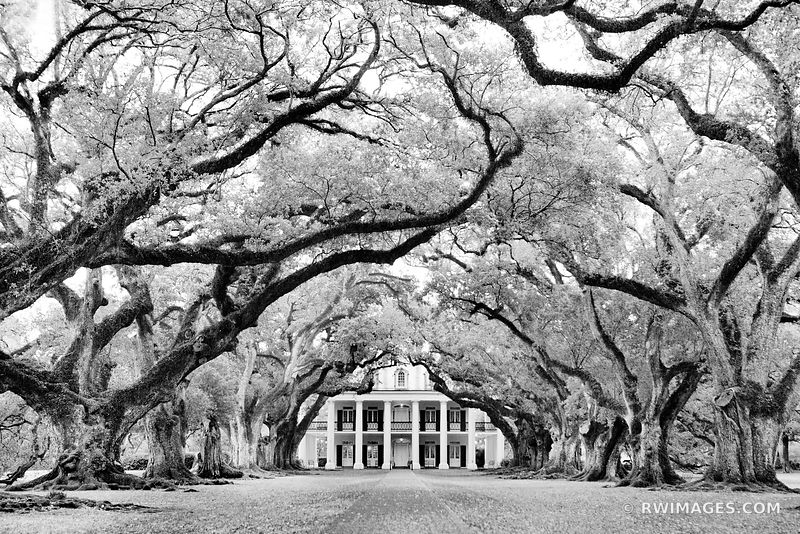 LOUISIANA Images Fine Art Prints Stock Photos Color & Black and White Pictures Framed Canvas Metal Acrylic Prints Interior Designer Art Consultant Large Wall Decor Art Source