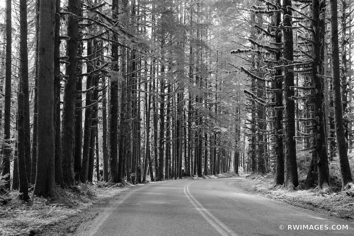 ROAD TO HOH RAINFOREST OLYMPIC NATIONAL PARK BLACK AND WHITE