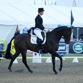 Eventing CIC3* Dressage photos