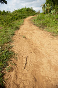 Dirt track leading to and from a rural village in Kenya.