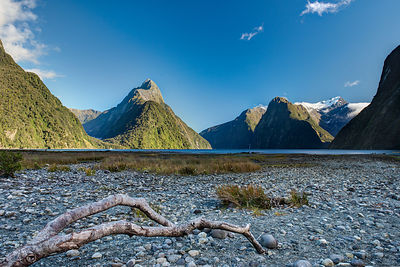 Driftwood in Milford Sound