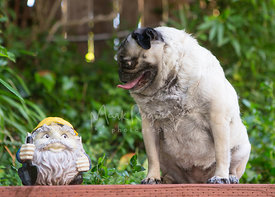 pug looking at dwarf statue with funny expression