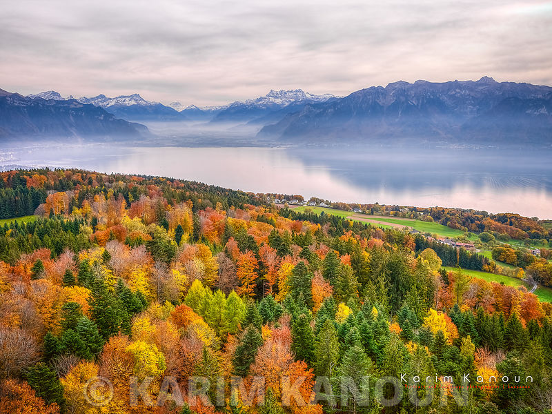 Autumn colors tree carpet with  the Swiss Alps and the Leman lake