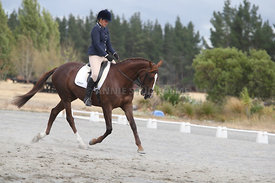 SI_Festival_of_Dressage_310115_Level_1_Champ_0711