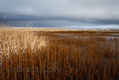 Remnant wetlands in the Lower Klamath NWR, California. Once the greatest wetlands in the western US, 80%% of the Klamath Basin wetlands are gone, and what remains is severely compromised.