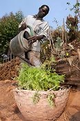 Man watering basket of Carrots. Rwanda