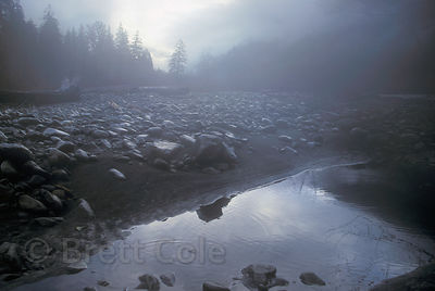 Foggy scene along the Hoh River, Olympic Rainforest, Washington.