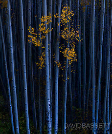 Aspen Noir | San Juan Mountains, CO