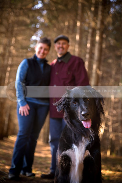 portrait of dog in pine forest with owners showing family