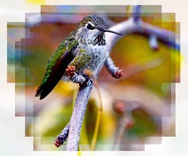 Hummer_stained_glass