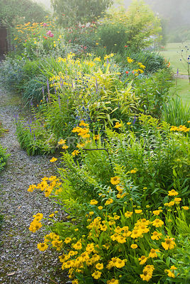 Hot borders include yellow Helenium 'Butterpat' and Madia elegans interspersed with blues of veronicas and eryngiums. The Cider House, Buckland Abbey, Yelverton, Devon, UK