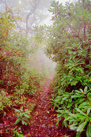 APPALACHIAN TRAIL SMOKY MOUNTAINS FALL