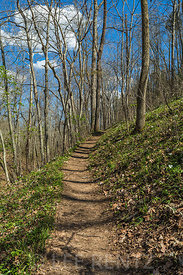 Trail through the Forest at Serpent Mound State Memorial