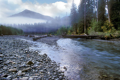 A foggy morning over the old growth forests lining the Hoh River, Olympic National ParkWashington