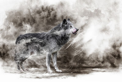 Art-Digital-Alain-Thimmesch-Loup-29