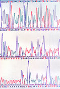 DNA sequencing print-out