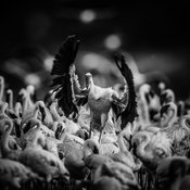 40471-Bird_Laurent_Baheux