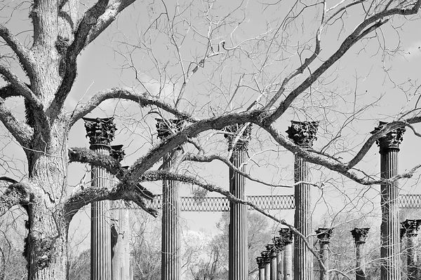 WINDSOR RUINS MISSISSIPPI BLACK AND WHITE