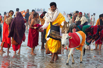 A man walks a cow around for donations at the Gangasagar Mela, Sagar Island, India. Gangasagar is a Hindu pilgrimage to Sagar Island, where the Ganges meets the sea.