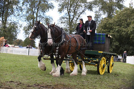 HOY_230314_clydesdales_3555