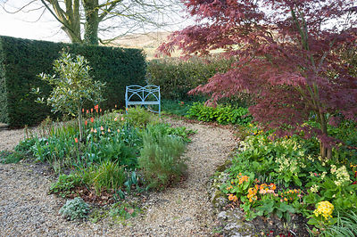 Gravel garden with standard variegated holly, rosemary and orange tulips, and an acer underplanted with lots of primulas, with fells beyond. Summerdale House, Lupton, Cumbria, UK