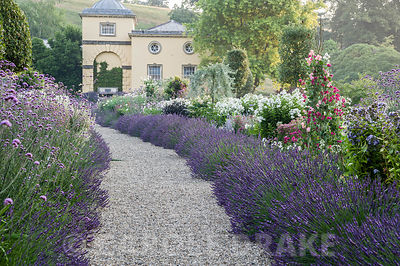 Summer borders in the Millennium Garden designed by Xa Tollemache are edged with Lavandula × intermedia 'Grosso' and feature Phlox paniculata 'White Admiral', Verbena bonariensis and sweet peas growing up hazel wigwams. Castle Hill, Barnstaple, Devon, UK