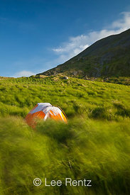 Tent on a windy day on Round Island, Alaska