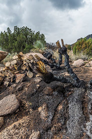 Fire Burned through Chihuahuan Desert Vegetation in the Organ Mountains
