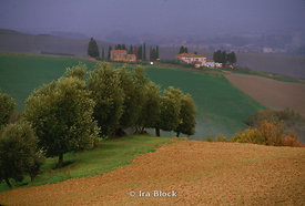 landscape of trees and Tuscan village