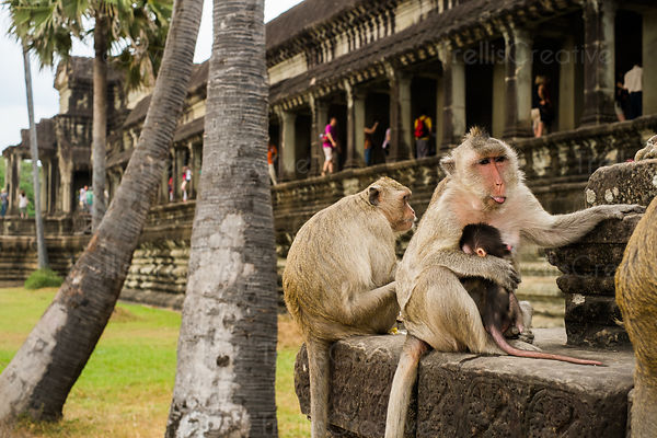 Monkey family sitting on ruins with tourists in the background at Angkor Wat, Cambodia