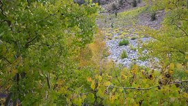 Close Up: Dolly Shot Of Fall Colors In Foliage