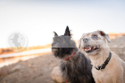 two small happy terrier dogs sitting together on beach