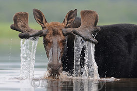 Moose Waterfall