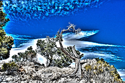 Blue sky dead tree HDR surreal